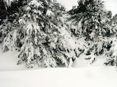 昨日の昼間までは雪なんてなかったのに・・・